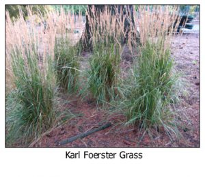 Karl-Forester