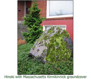 Massachusetts-Kinnikinnick