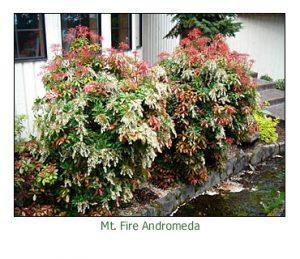 mt-fire-adromeda