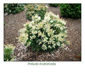prelude-andromeda