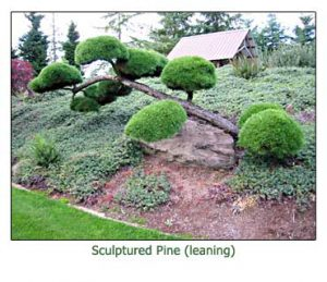 sculptured-pine-leaning